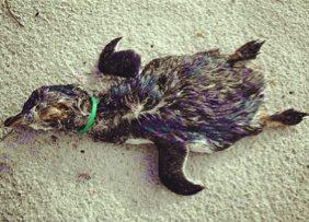 penguin dead