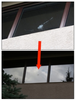 Bird window imprint E&P